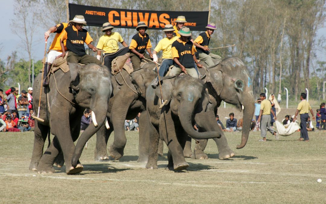 Elephant Polo and becoming an 'Olympic Champion'